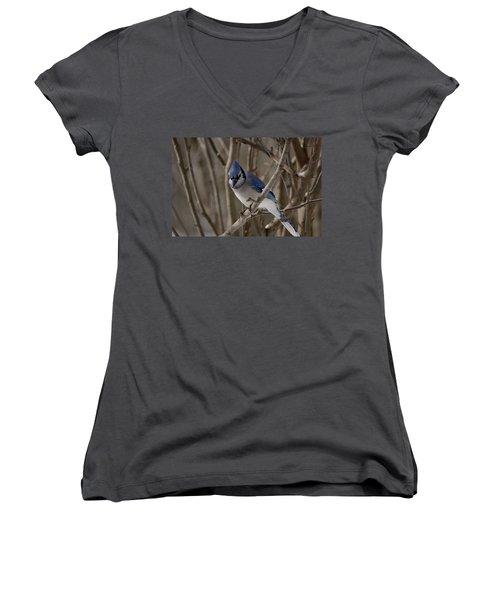 Women's V-Neck T-Shirt (Junior Cut) featuring the photograph Sitting Pretty by David Porteus