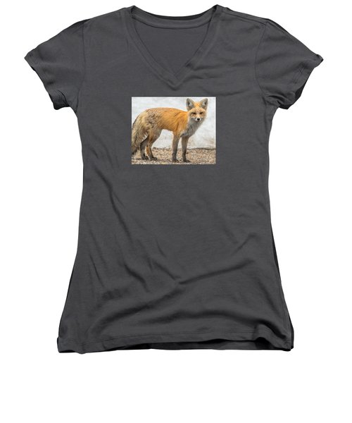 Women's V-Neck T-Shirt (Junior Cut) featuring the photograph Smart Like A Fox by Yeates Photography