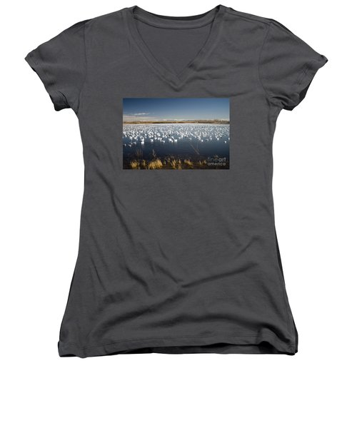 Snow Geese - Bosque Del Apache Women's V-Neck (Athletic Fit)
