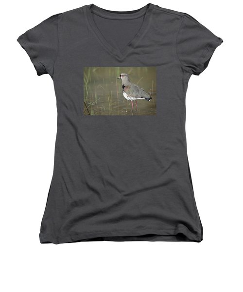 Southern Lapwing In Marshland Pantanal Women's V-Neck T-Shirt (Junior Cut) by Tui De Roy