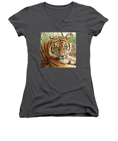 Staring Tiger Women's V-Neck T-Shirt