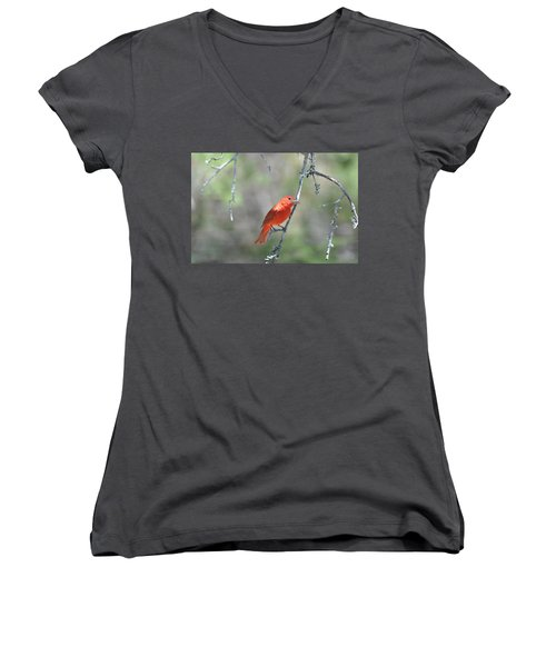 Summer Tanager Women's V-Neck