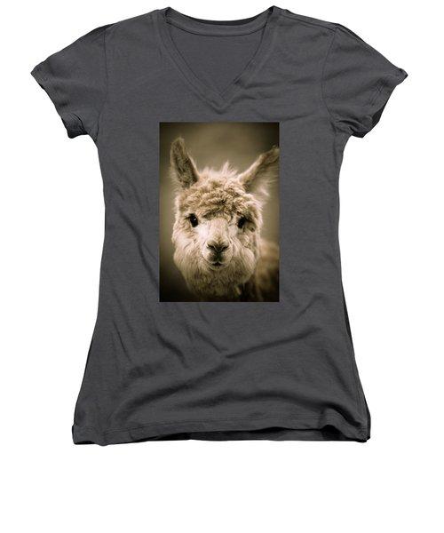 Sweet Alpaca Women's V-Neck T-Shirt