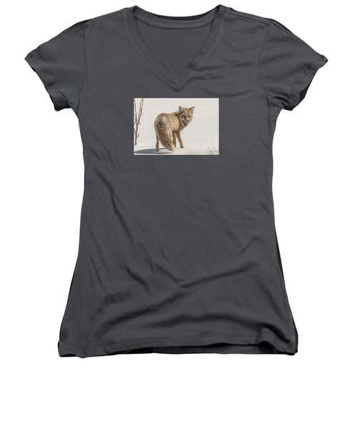 Women's V-Neck T-Shirt (Junior Cut) featuring the photograph The Hungry Fox by Yeates Photography