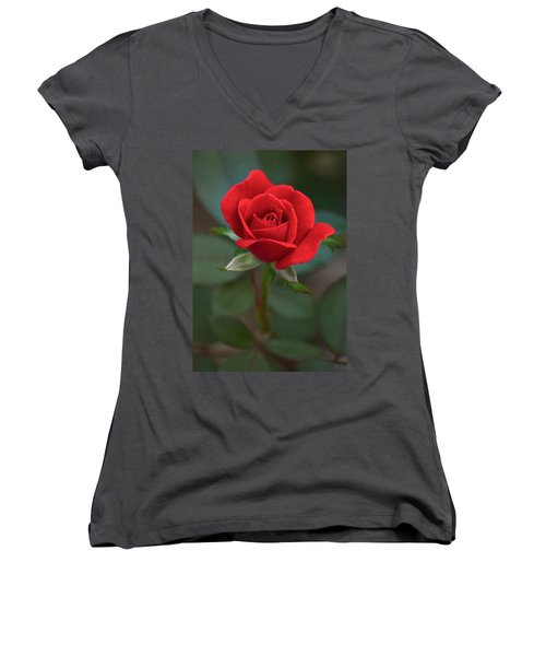 The Perfect Rose Women's V-Neck