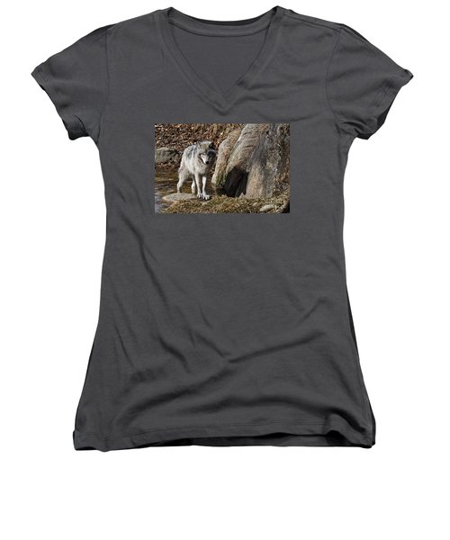 Women's V-Neck T-Shirt (Junior Cut) featuring the photograph Timber Wolf In Pond by Wolves Only