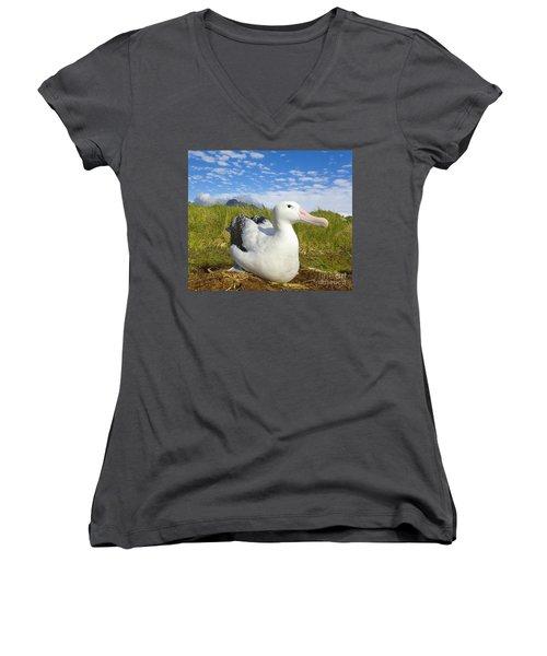 Wandering Albatross Incubating  Women's V-Neck T-Shirt (Junior Cut) by Yva Momatiuk John Eastcott