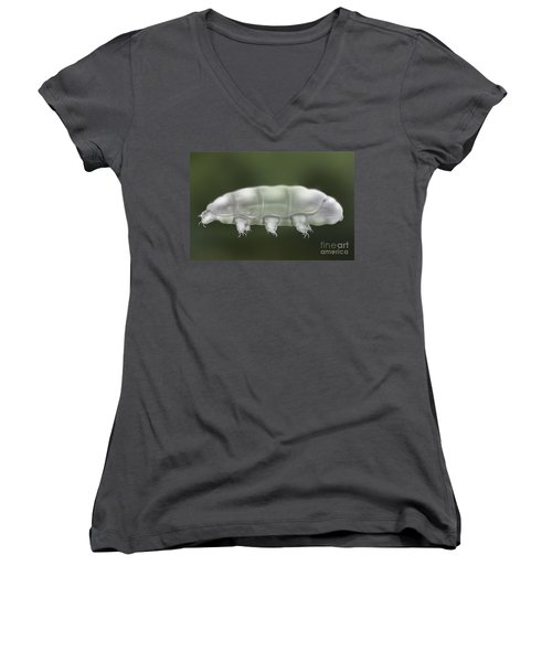 Water Bear Tardigrada - Waterbear Tardigrade  - Scientific Illustration Women's V-Neck