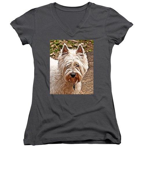 Women's V-Neck T-Shirt (Junior Cut) featuring the photograph West Highland White Terrier by Robert L Jackson