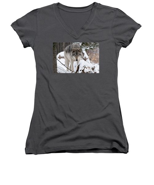 Women's V-Neck T-Shirt (Junior Cut) featuring the photograph Winter Timber Wolf by Wolves Only