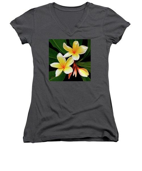 Yellow Plumeria Women's V-Neck T-Shirt (Junior Cut) by Ben and Raisa Gertsberg