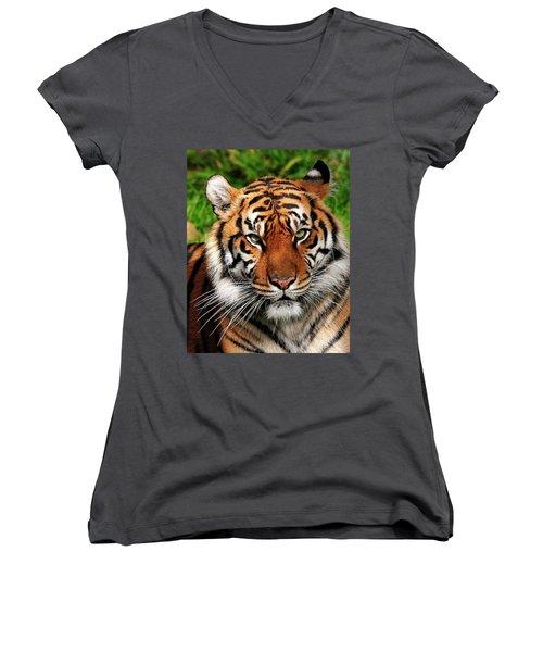 Sumatran Tiger Portrait Women's V-Neck
