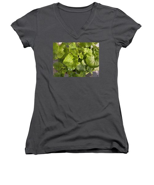A Green Leafy Vegetable Plant After Watering In Bright Sunrise Women's V-Neck T-Shirt (Junior Cut) by Ashish Agarwal