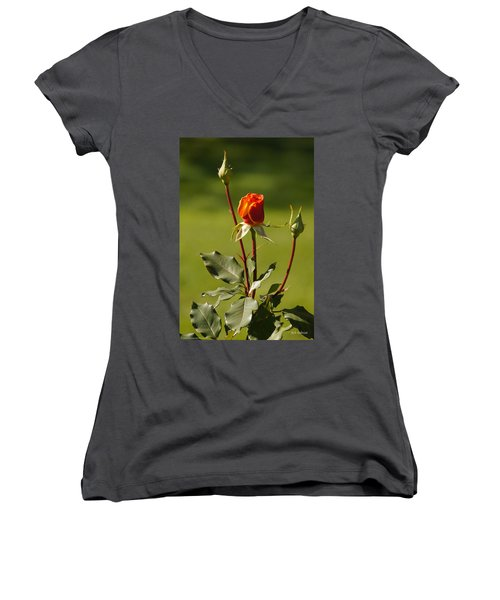 Autumn Rose Women's V-Neck T-Shirt (Junior Cut) by Mick Anderson