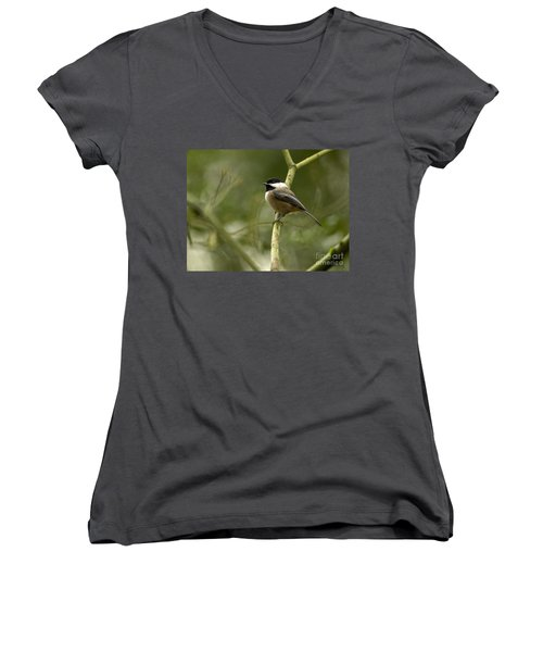 Black-capped Chickadee With Branch Bokeh Women's V-Neck