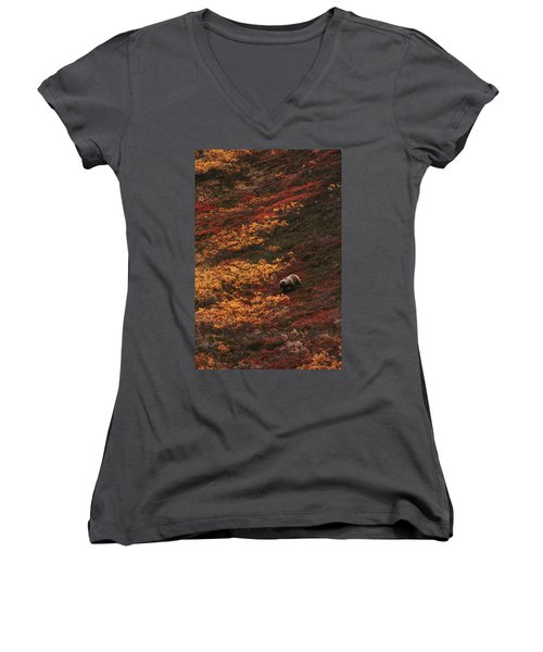 Brown Bear Denali National Park Women's V-Neck (Athletic Fit)
