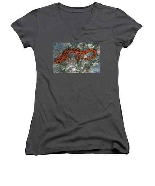 Cave Salamander Women's V-Neck T-Shirt (Junior Cut) by Dante Fenolio