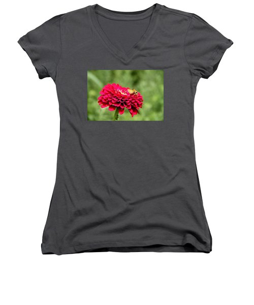 Women's V-Neck T-Shirt (Junior Cut) featuring the photograph Dahlia's Moth by Elizabeth Winter