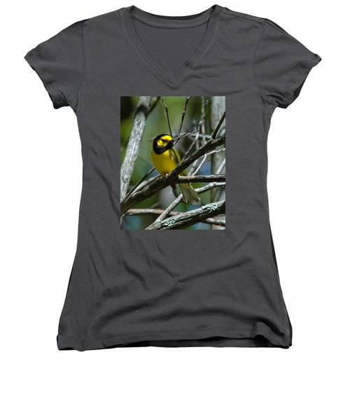 Hooded Warbler Dsb166  Women's V-Neck T-Shirt (Junior Cut) by Gerry Gantt