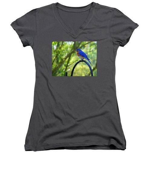 Mr Bluebird Women's V-Neck T-Shirt