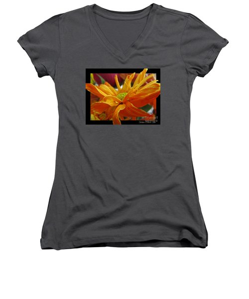 Women's V-Neck T-Shirt (Junior Cut) featuring the photograph Orange Juice Daisy by Debbie Portwood