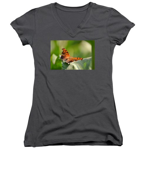 Women's V-Neck T-Shirt (Junior Cut) featuring the photograph Question Mark Butterfly by JD Grimes