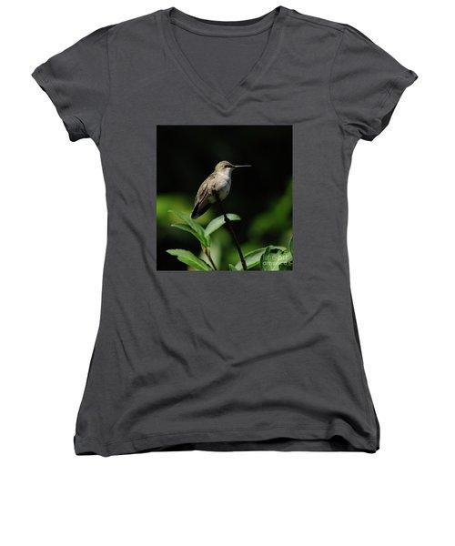 Ruby-throated Hummingbird Female Women's V-Neck T-Shirt