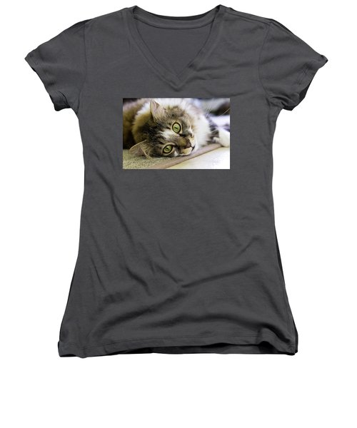 Tabby Cat Looking At Camera Women's V-Neck (Athletic Fit)