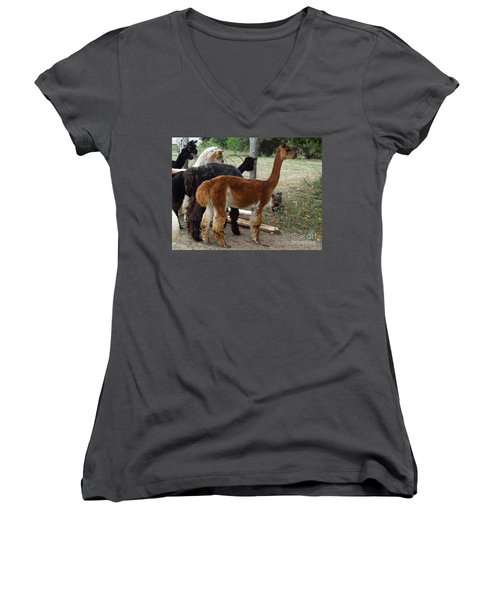 The Cat Came Back Women's V-Neck (Athletic Fit)