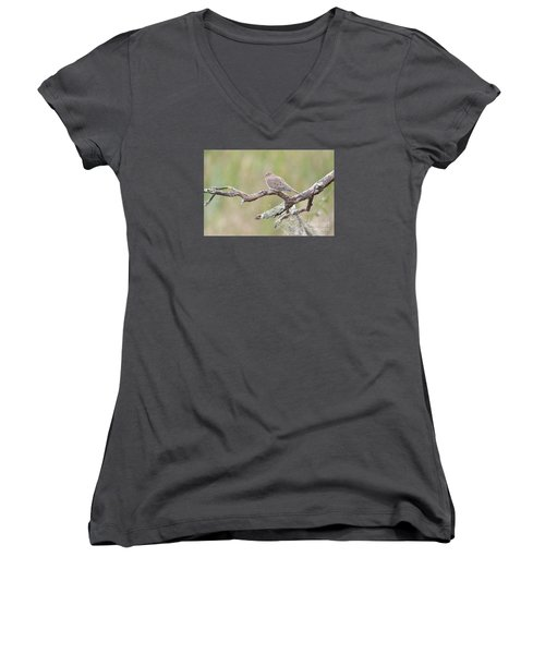 Early Mourning Dove Women's V-Neck (Athletic Fit)