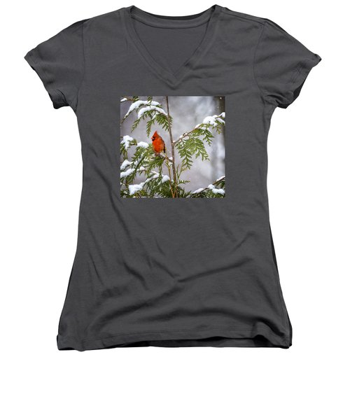 Cardinal In The Snow Women's V-Neck