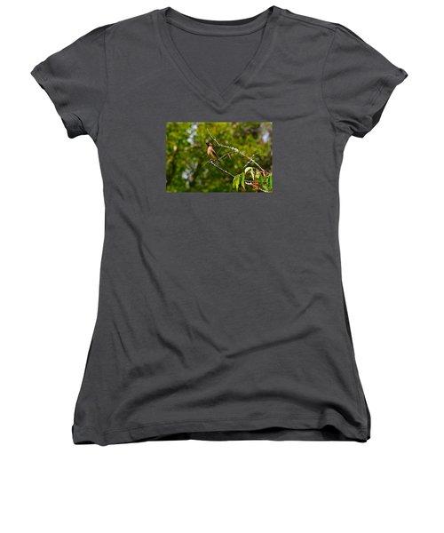 Cedar Waxwing Women's V-Neck T-Shirt (Junior Cut) by Dan Hefle