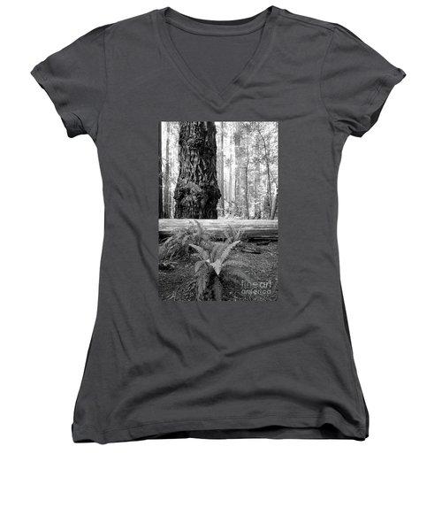 Coastal Redwoods  Women's V-Neck