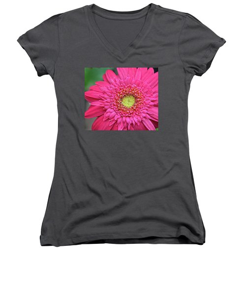 Gerbera Daisy Women's V-Neck T-Shirt (Junior Cut) by Ronda Ryan