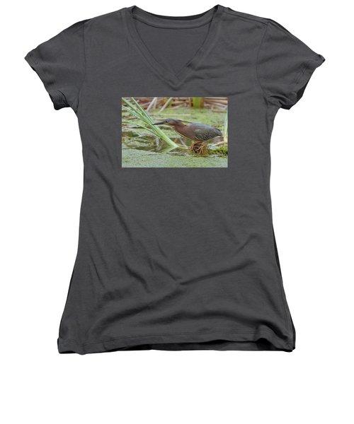 Green Heron Women's V-Neck T-Shirt (Junior Cut) by Doug Herr