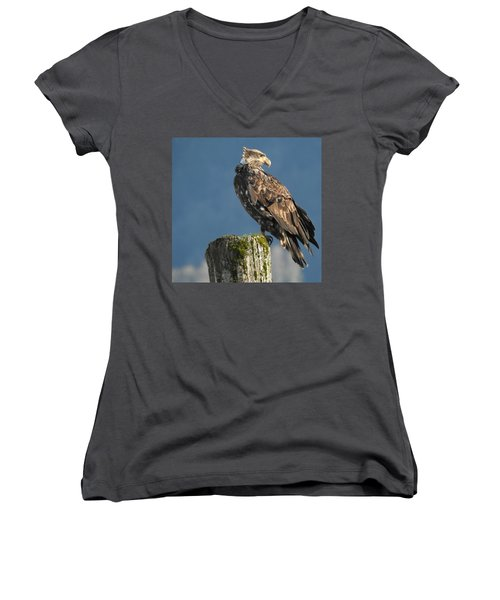 Immature Bald Eagle Women's V-Neck T-Shirt (Junior Cut) by Brian Chase
