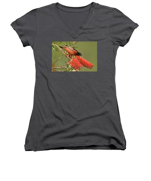 Orchard Oriole  Women's V-Neck T-Shirt (Junior Cut) by Alan Lenk