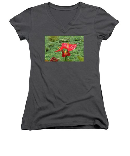 Women's V-Neck T-Shirt (Junior Cut) featuring the photograph Red Anthurium Flower by Hans Engbers