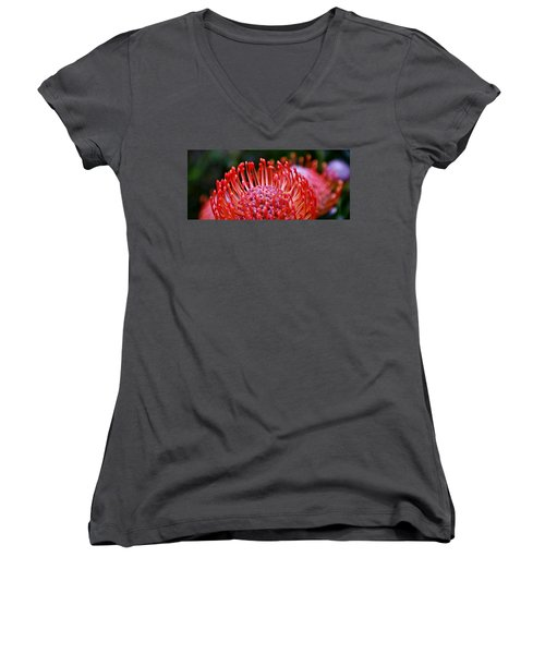 Red  Pincushion Protea Women's V-Neck T-Shirt (Junior Cut) by Werner Lehmann