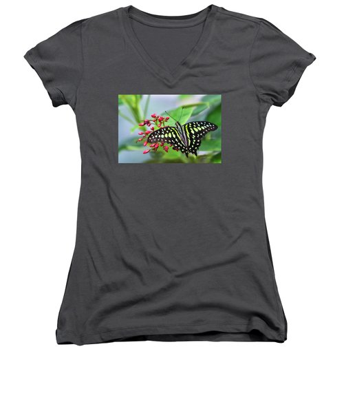 Women's V-Neck T-Shirt featuring the photograph Tailed Green Jay Butterfly  by Saija Lehtonen