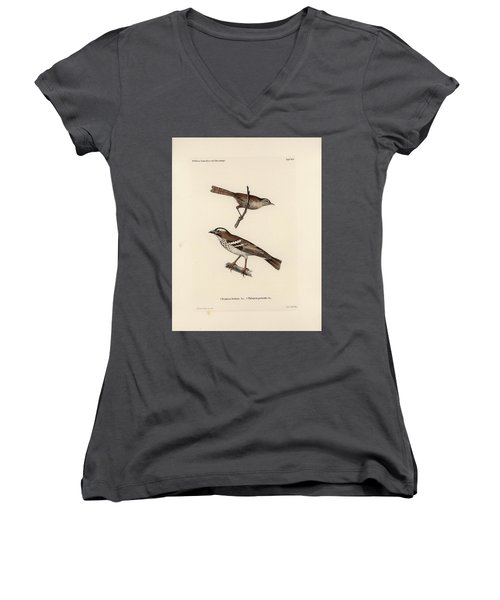 White-browed Sparrow-weaver And Grass Or Bush Warbler Women's V-Neck T-Shirt (Junior Cut) by J D L Franz Wagner