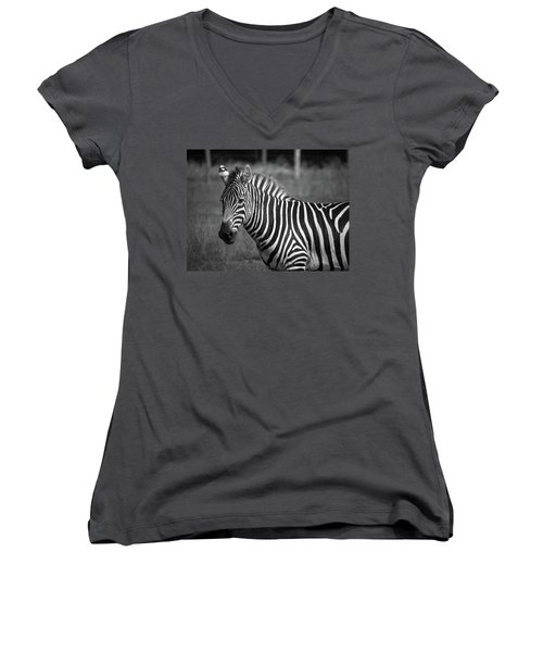 Women's V-Neck T-Shirt (Junior Cut) featuring the photograph Zebra by Trace Kittrell