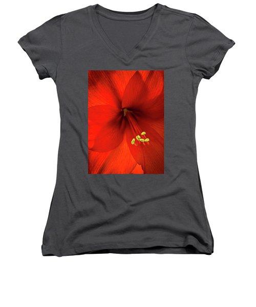 Amaryllis Women's V-Neck T-Shirt (Junior Cut) by Denis Lemay