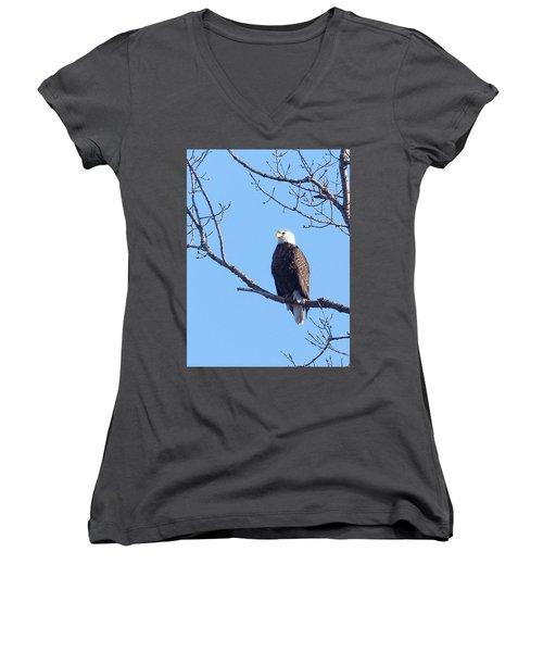 American Bald Eagle Women's V-Neck T-Shirt