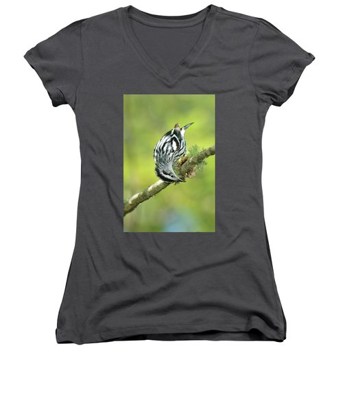 Black And White Warbler Women's V-Neck T-Shirt (Junior Cut) by Alan Lenk