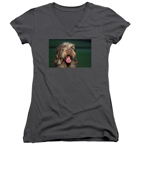 Brown Roan Italian Spinone Dog Head Shot Women's V-Neck (Athletic Fit)