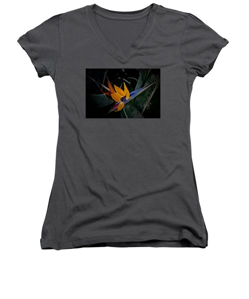 A Bright Blooming Bird Women's V-Neck T-Shirt (Junior Cut) by Tim Good