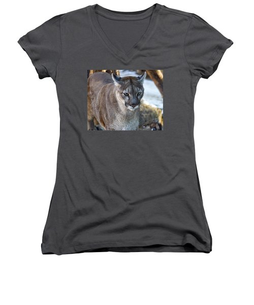 A Stunning Mountain Lion Women's V-Neck (Athletic Fit)