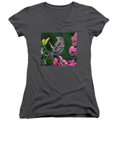 Adorable House Finch Women's V-Neck T-Shirt (Junior Cut) by Jim Moore