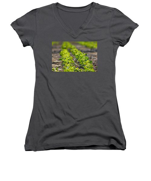 Agriculture- Soybeans 1 Women's V-Neck T-Shirt